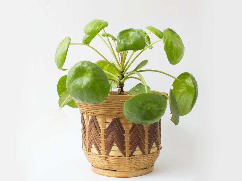 gift idea for the home -  vintage wicker plant holder