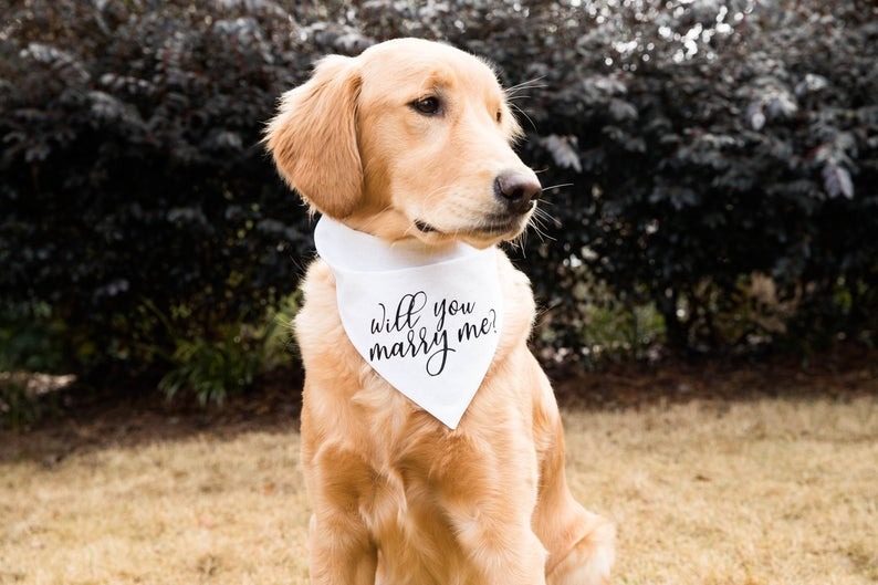 will you marry me bandana - puppy dog proposal - ways to propose while at home